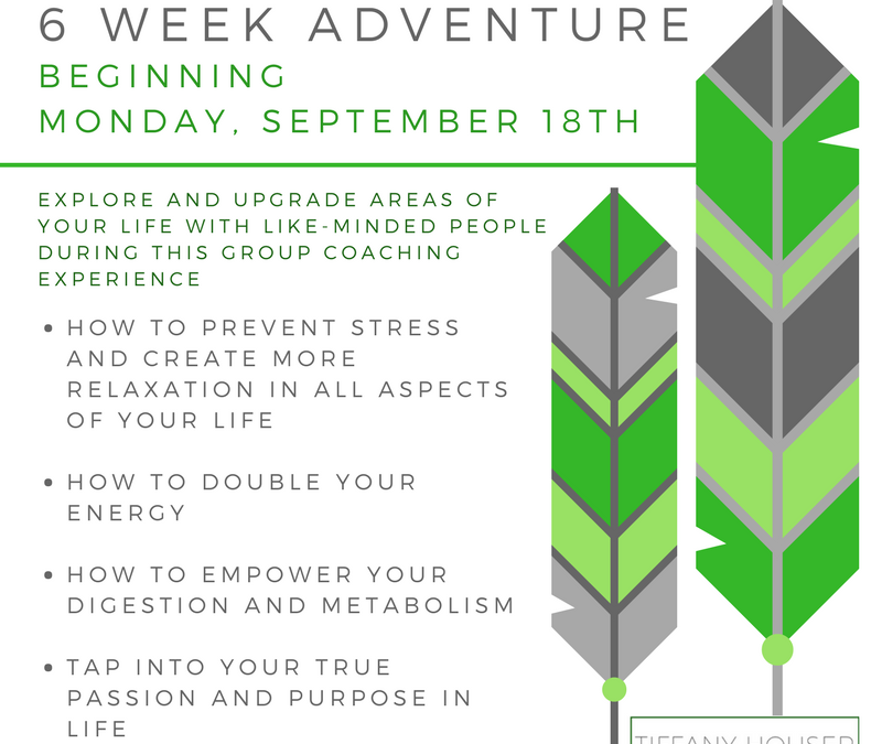 6 Week Group Coaching Experience
